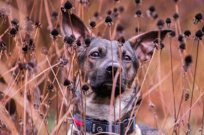 Как улучшить контакт с собакой на прогулке. Часть 2